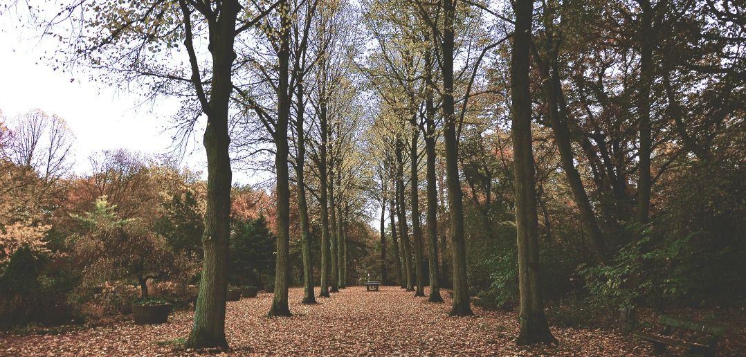 Parkrun,Berlin,Sightrunning,Jogging,Sports